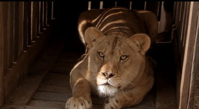 Secondhand Lions Jasmine